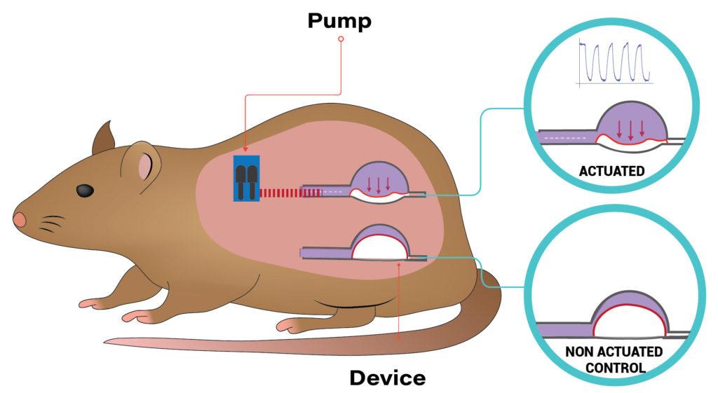 immune response soft robotics